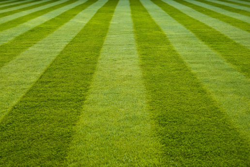 Grow A Beautiful Lawn Naturally Snowhill Landscape